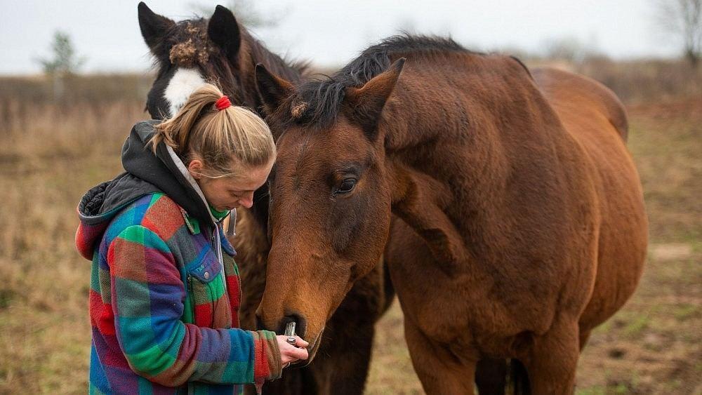 Kas yra arklio nario dydis