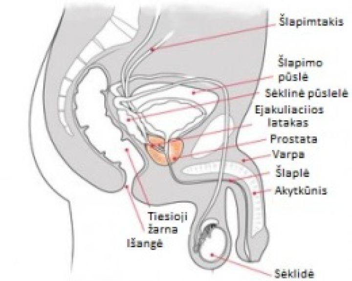 Padidinti vyru organus